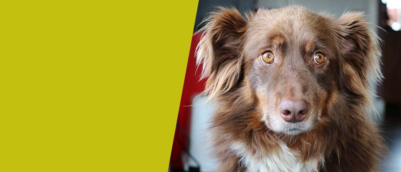Abbild eines ängstlich dreinblickenden Hundes
