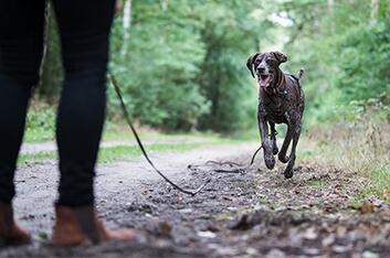 Anti-Jagd-Training Hundeschule Ziemer