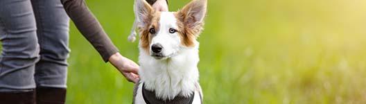 auslandshunde-kurs-fuer-aengstliche-faelle-ausschnitt