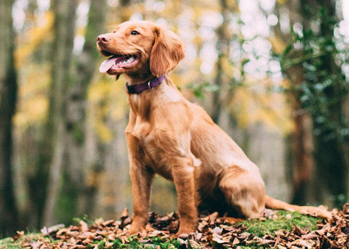 Auslastung für jagdlich motivierte Hunde