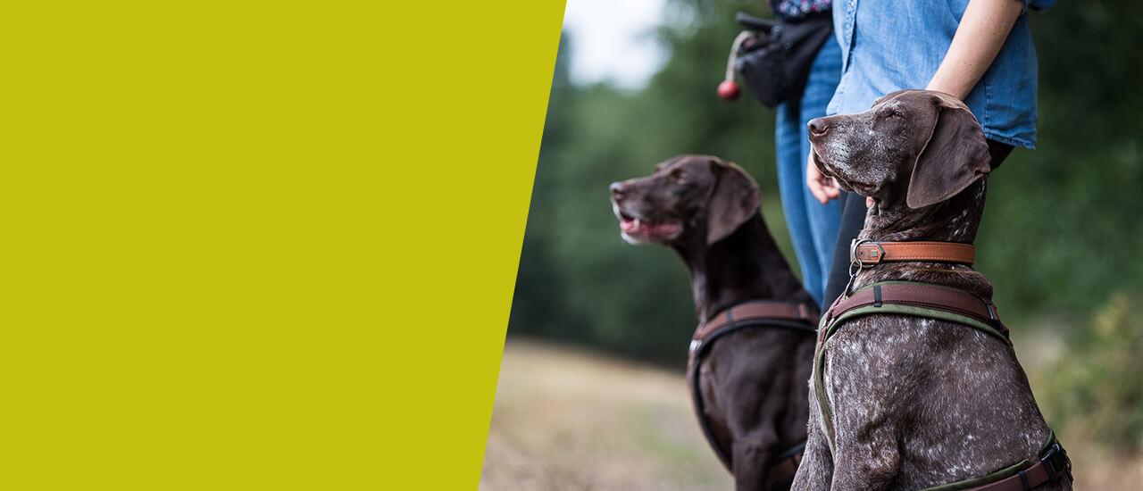 Auslastungskurs für jagdlich motivierte Hunde