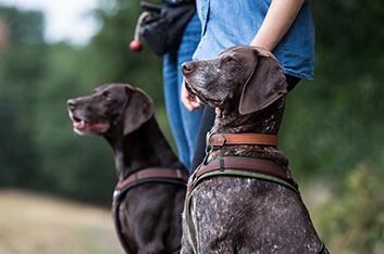 Auslastungskurs für jagdlich motivierte Hunde Hundeschule Ziemer
