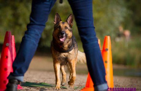 Crossdogging Hund und Halter