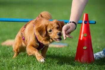 Crossdogging - Hundeschule Ziemer
