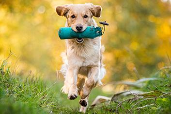 Dummytraining Basis - Hundeschule Ziemer