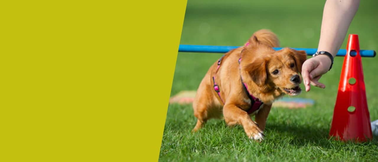 Hundeschule Ziemer Crossdogging Kurs