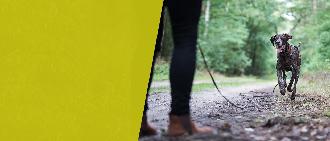 Hundeschule Ziemer Anti-Jagd-Kurs