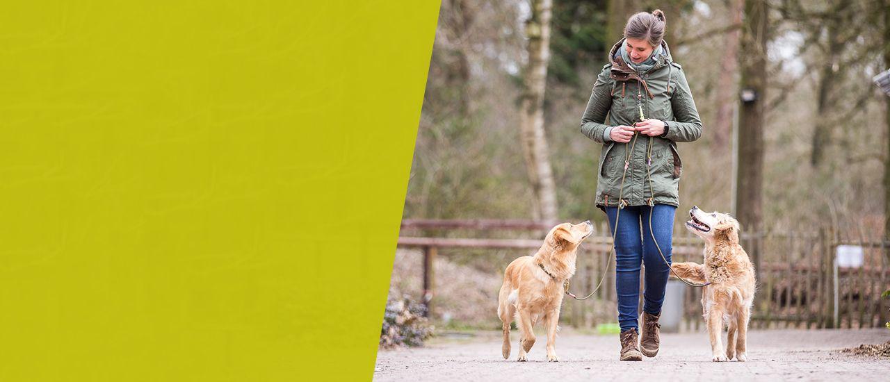 Hundeschule Ziemer Kursübersicht Slider