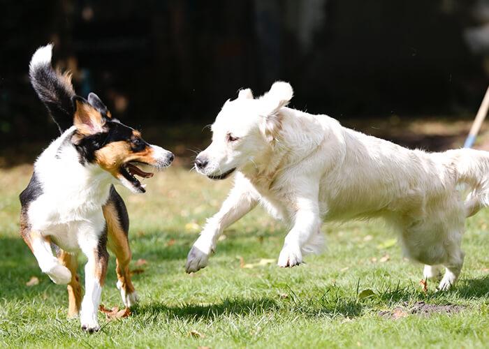 Junghunde-Kurs