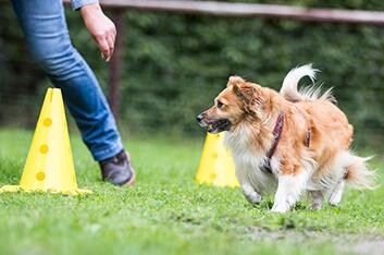 Kleinhundekurs - Hundeschule Ziemer