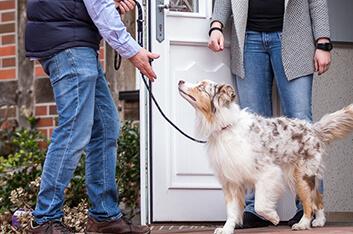 Kursbegleitung - Hundeschule Ziemer