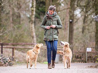 Kurse Hundeschule Ziemer