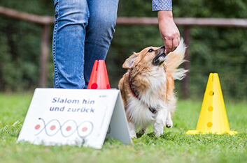 Rally-Obedience-Kurs - Hundeschule Ziemer
