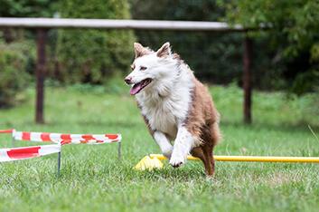 Locagility - Hundeschule Ziemer