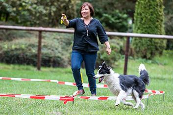 Longenkurs - Hundeschule Ziemer