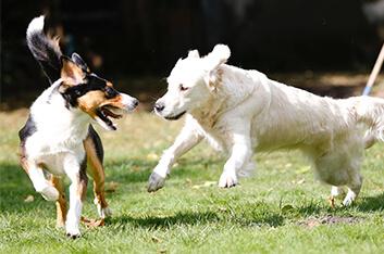 Junghundekurs - Hundeschule Ziemer