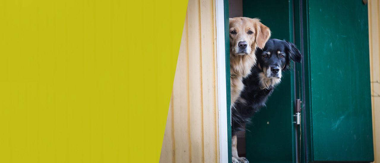 Sachkundenachweis für Hunde