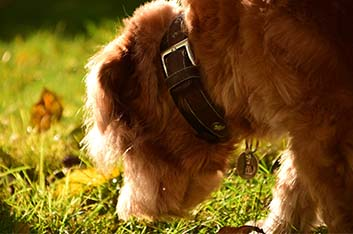 Schnüffelkurs Nasenarbeit Hunde Hundeschule Ziemer