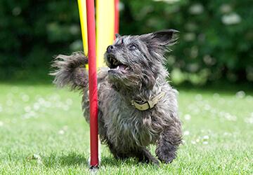 Schnuppertag für Hundesport