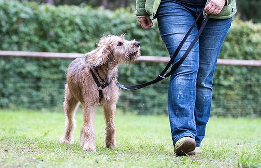 Hund geht an der Leine neben seiner Halterin