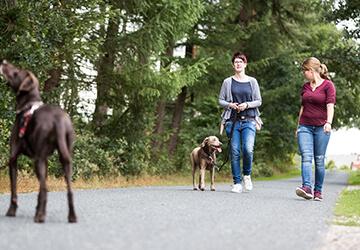 Hundetrainerin und Halter trainieren die Annäherung zweier Hunde an der Leine