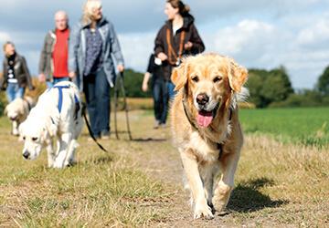 Gruppe von Haltern spaziert mit Hunden auf Feldweg