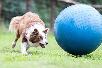 Treibballkurs - Hundeschule Ziemer